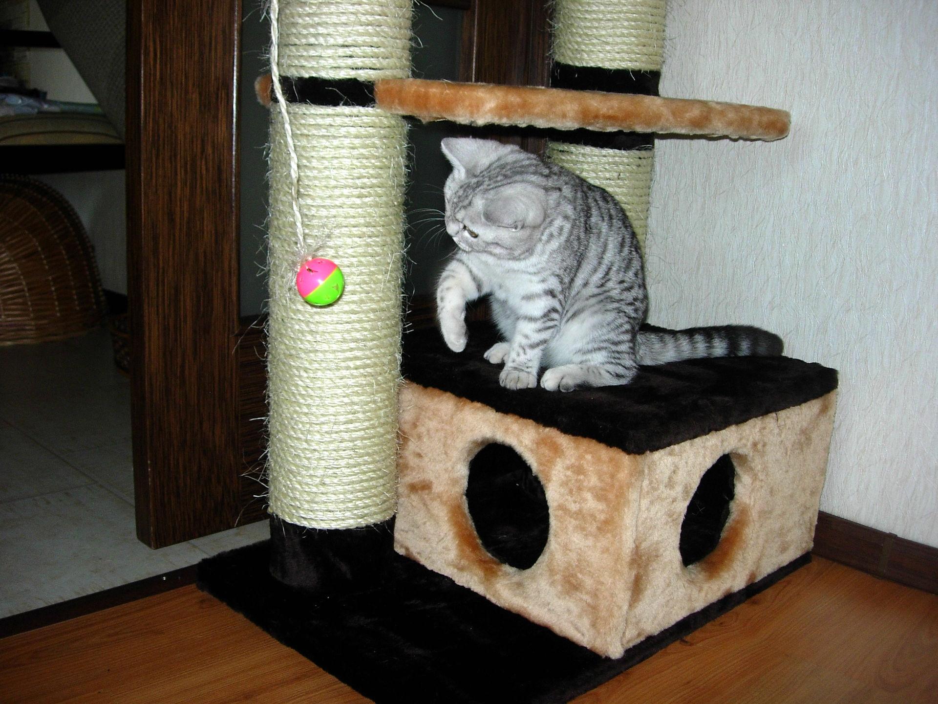 Домики для кошек с когтеточкой своими руками фото 322