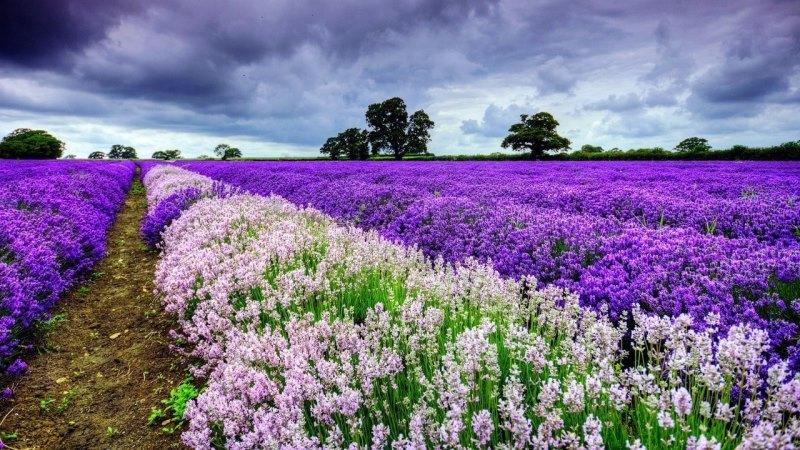 цветущие поля средиземноморья