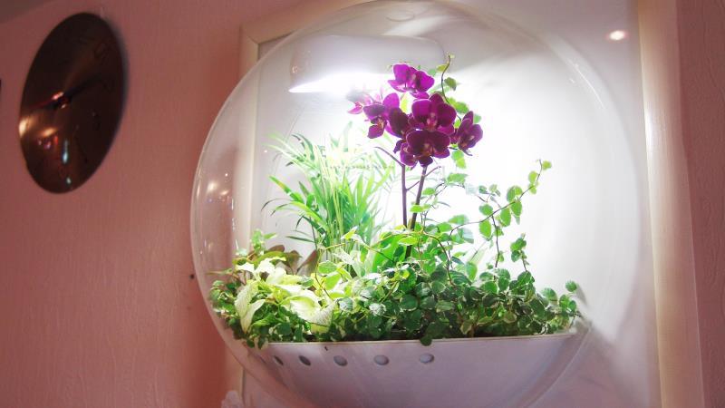 флорариум сферический настенный