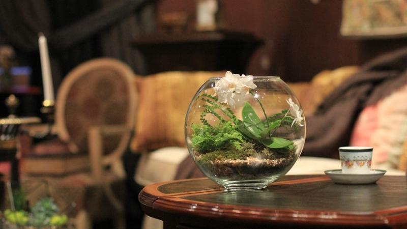 флорариум в интерьере комнаты