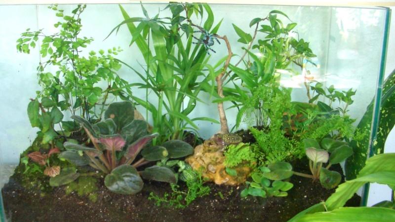 на фото растения для флорариума