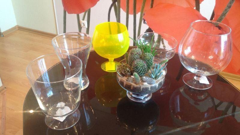 сосуды для самодельных оранжерей