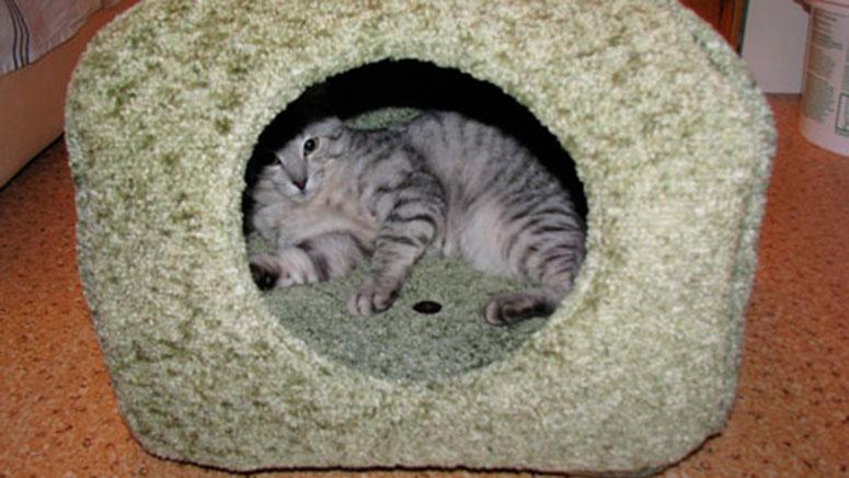 домик для кошки из поролона