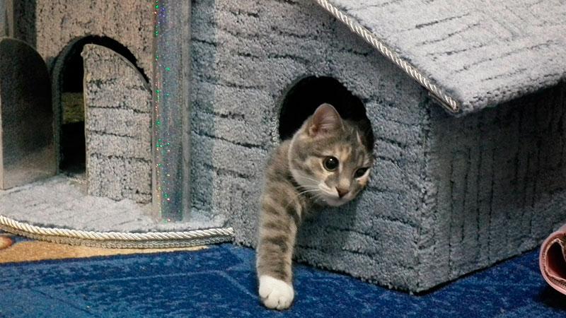 Как сделать домик для кошки своими руками? Фото, видео