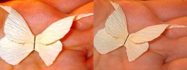 готовая бабочка